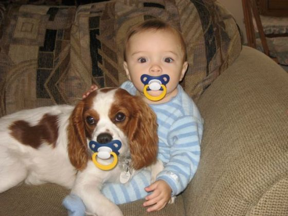 A dog, a baby and two pacifiers.