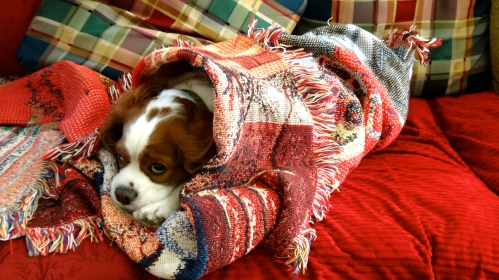 """Henry and I go into safety mode, covering ourselves with blankets to protect from possible disasters. """"Oh, bother,"""" he says."""