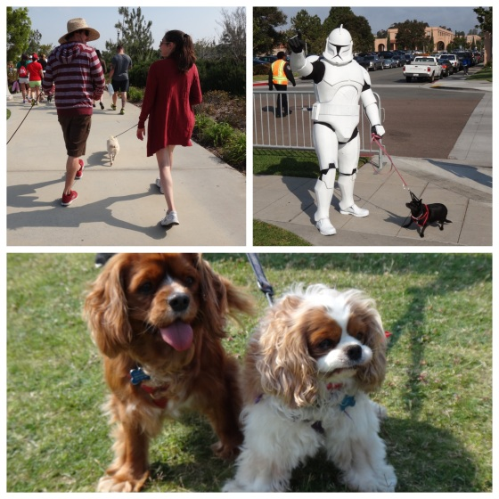 Happy Dogs and their owners everywhere. Even stormtroopers love their dogs!