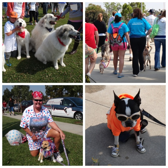 Cool dogs, big dogs and even costumed dogs. This Walk for Animals had it all.