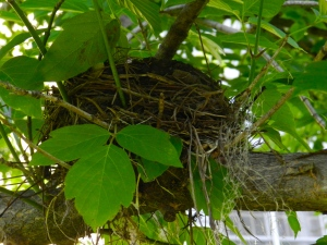 Renewed my sense of wonder over a simple bird's nest.