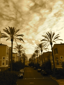 I snapped this photo on a walk a few weeks ago. I just love the palm trees against the cloudy sky.