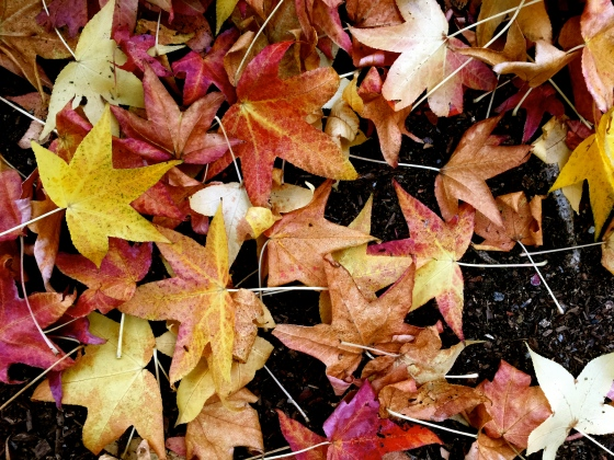 """Autumn Leaves,"" sung by Nat King Cole, is the first song I remember hearing. Because of this I have strong unexplainable feelings for the song. I melt when I hear it."