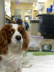 Henry in his hospital suite. No crate for this royal. Heh-heh.